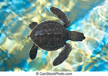 Baby sea turtle swimming in water