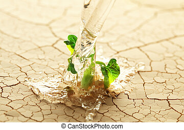 Watering a plant sprouting in the desert