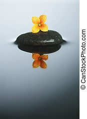 Flower on stone in water