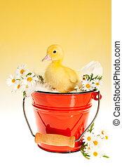 Duckling in red bucket