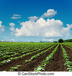 agriculture field close up and blue sky with clouds over it