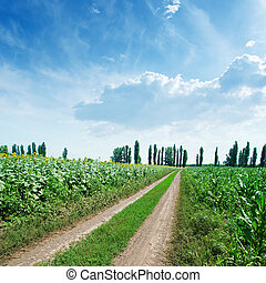 rural road in green fields and blue cloudy sky