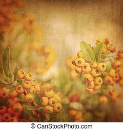 Rowanberry grunge background, old rustic natural backdrop,...