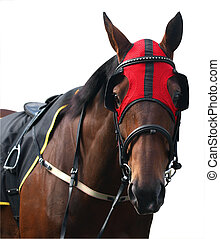Racehorse with Red Hood isolated with clipping path...