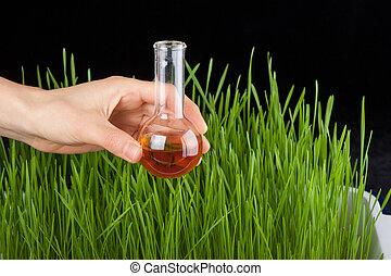 fertilizante, prueba, tubo, pasto o césped, mano