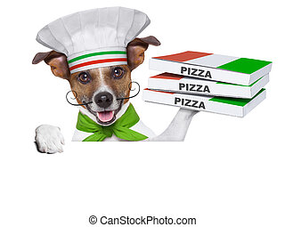 pizza delivery dog with a stack of pizza boxes on a blank...