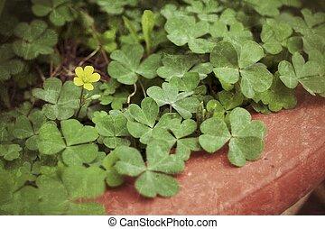 Clover leaf green