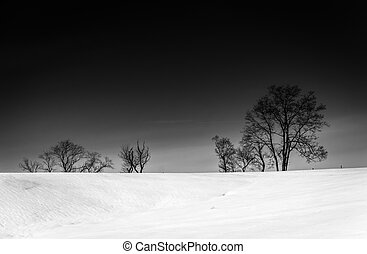 Trees on a snow covered hill in Seven Valleys, Pennsylvania....