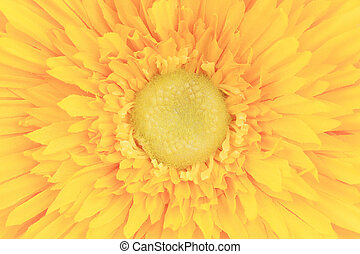 Yellow flower core closeup. Close up. Whole background.