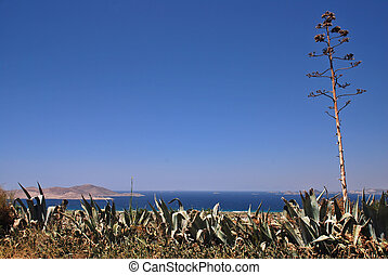 Greece and agave - Greek islands, sea and agave americana