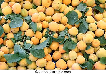 lot of ripe apricot
