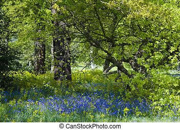 harangvirág, erdő