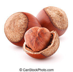 hazelnut or filbert nut isolated on white background cutout...
