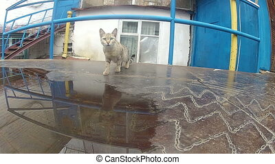 Cat on the iron roof