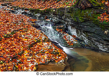 Autumn Brook - A small stream cuts through limestone with...