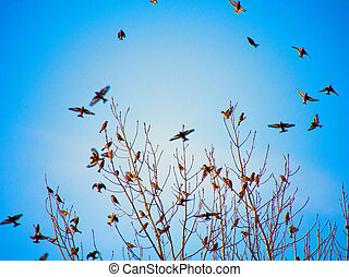 Black silhouettes of birds flying on blue sky background