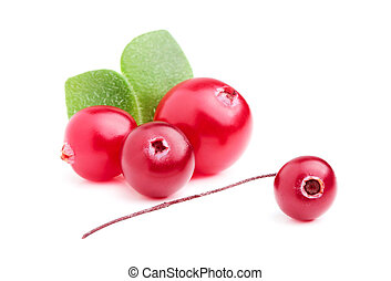 A handful of cranberries with leaves. - A handful of...