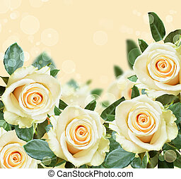 Roses on peach backround - Peach background with white roses