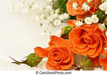 Roses on white background - Orange roses on white background