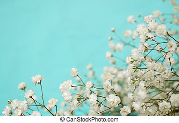 White flowers on blue background - White flowers in a corner...