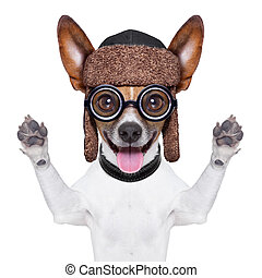 dumb crazy dog - crazy silly dog with funny glasses showing...