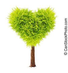 Heart shape tree. Isolated on white background