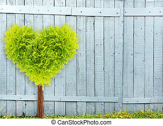 Old wooden fence and heart shape tree - Heart shape tree and...