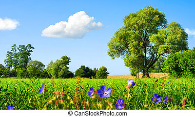 Idyllic meadow at nice weather - Idyllic landscape with...