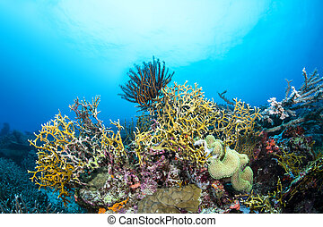 Fire coral on reef - Dangerous fire coral lines a tropical...