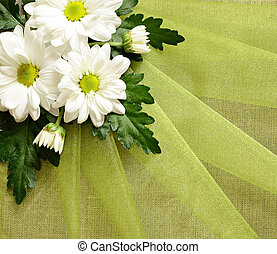 Daisies on organza - 	Daisy arrangement on folded organza