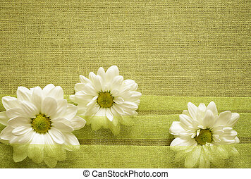 Daisies in the folds of organza