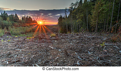 Area Deforested For Power Lines - Clearing cut in forest so...