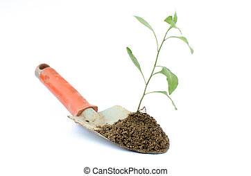 Transplant of a tree and garden tools on a white background....