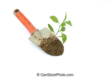 Transplant of a tree and garden tools on a white background.