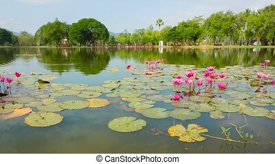 Ornamental pond in the park with lilies Thailand, Sukhothai...