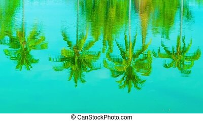 Coconut palms reflection in a pond
