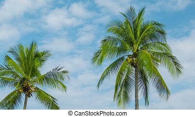 Coconut palms swaying on sky background