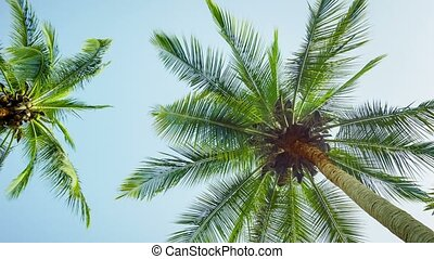 The tops of coconut palms on sky background