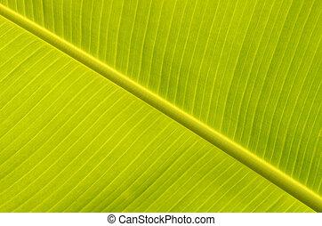Banana leaves - a photo of season of Banana leaves Banana...