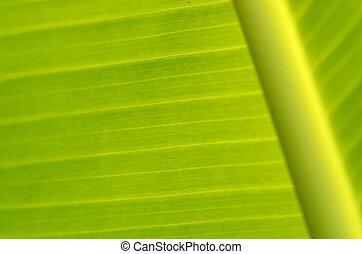 Banana leaves - a photo of season of Banana leaves / Banana...