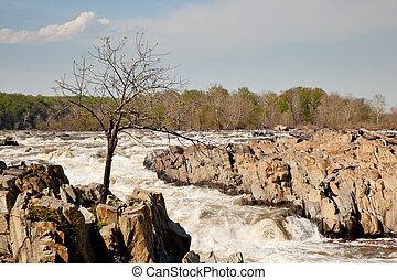 Gaunt tree in front of Great Falls - Great Falls on the...