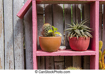 Potted cactus, bamboo hanging the walls.