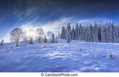 Blue panorama of the winter forest in the mountains