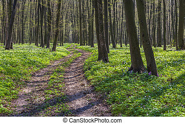 The path between the fields of blooming flowers in the...