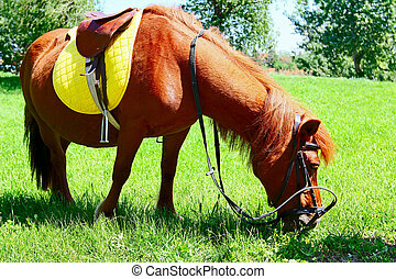 Horse with saddle trimming grass in field