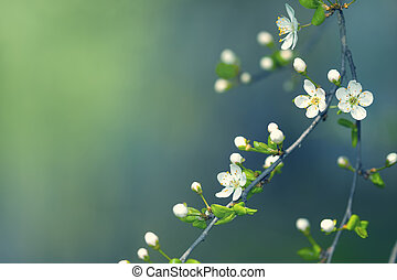 Spring Flowers - Spring flowers for background with copy...