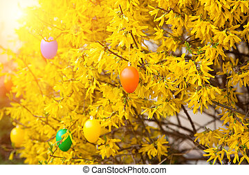easter eggs  hanging on bush in spring
