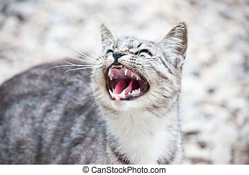 wildcat - wild predatory cat warns danger