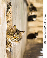 cats - outdoor cat look out from the hole in sunny day