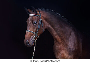 Horse on the black background - Bay horse portrait on the...